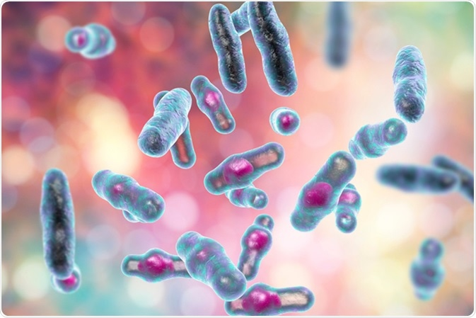 Clostridium perfringens bacteria, anaerobic spore-producing bacteria, the causative agent of gas gangrene infection and food poisoning, 3D illustration. Image Credit: Kateryna Kon / Shutterstock