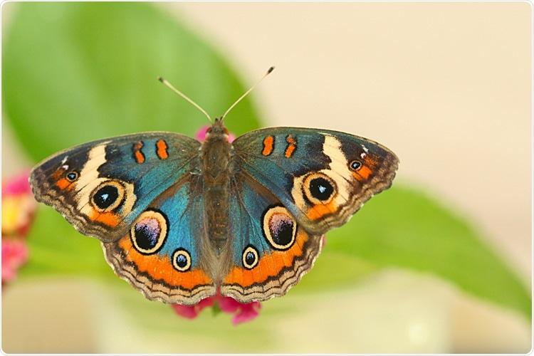 Iridescent Butterflies